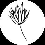Na zdjęciu widzimy graficzną formę kwiatka